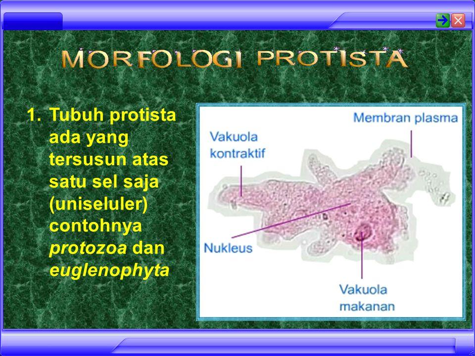 Tubuh protista ada yang tersusun atas satu sel saja (uniseluler) contohnya protozoa dan euglenophyta