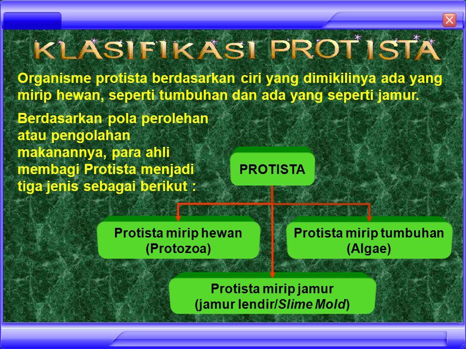 Protista mirip tumbuhan (jamur lendir/Slime Mold)