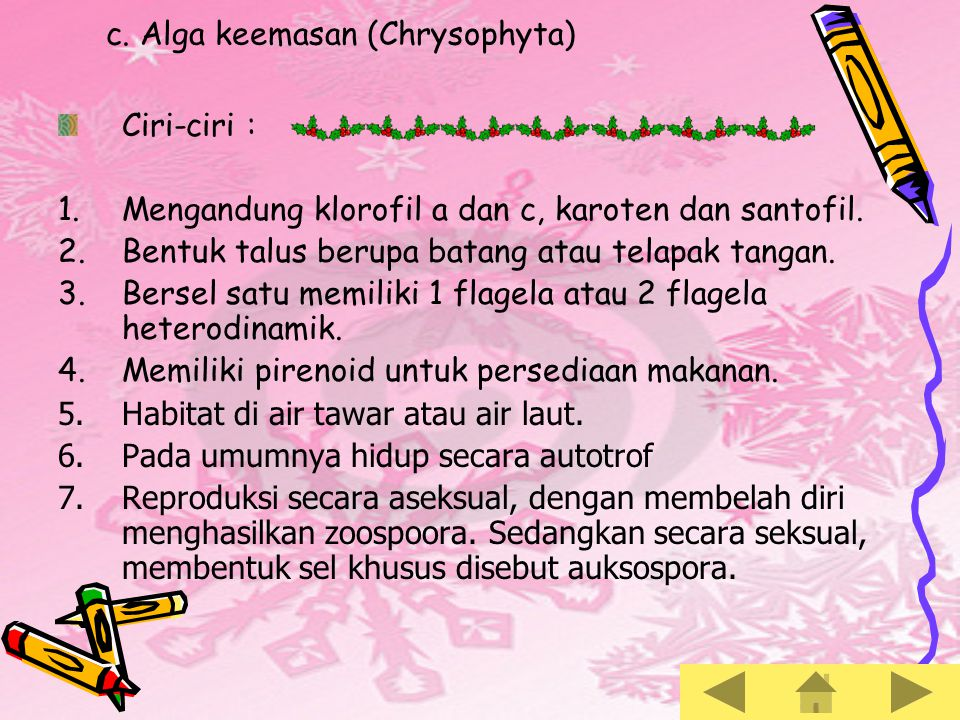 c. Alga keemasan (Chrysophyta)