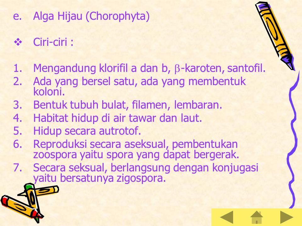 Alga Hijau (Chorophyta)