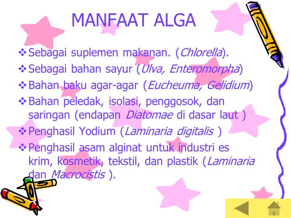 MANFAAT ALGA Sebagai suplemen makanan. (Chlorella).