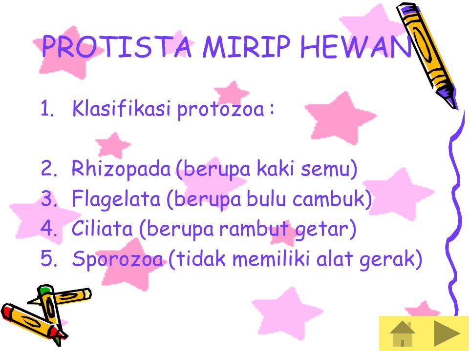 PROTISTA MIRIP HEWAN Klasifikasi protozoa :