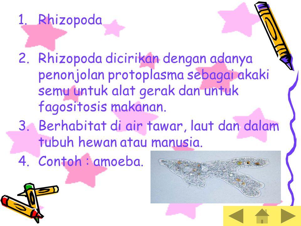 Rhizopoda Rhizopoda dicirikan dengan adanya penonjolan protoplasma sebagai akaki semu untuk alat gerak dan untuk fagositosis makanan.