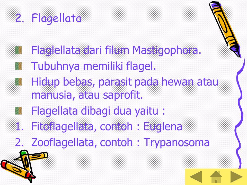 Flagellata Flaglellata dari filum Mastigophora. Tubuhnya memiliki flagel. Hidup bebas, parasit pada hewan atau manusia, atau saprofit.