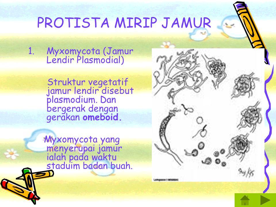 PROTISTA MIRIP JAMUR Myxomycota (Jamur Lendir Plasmodial)
