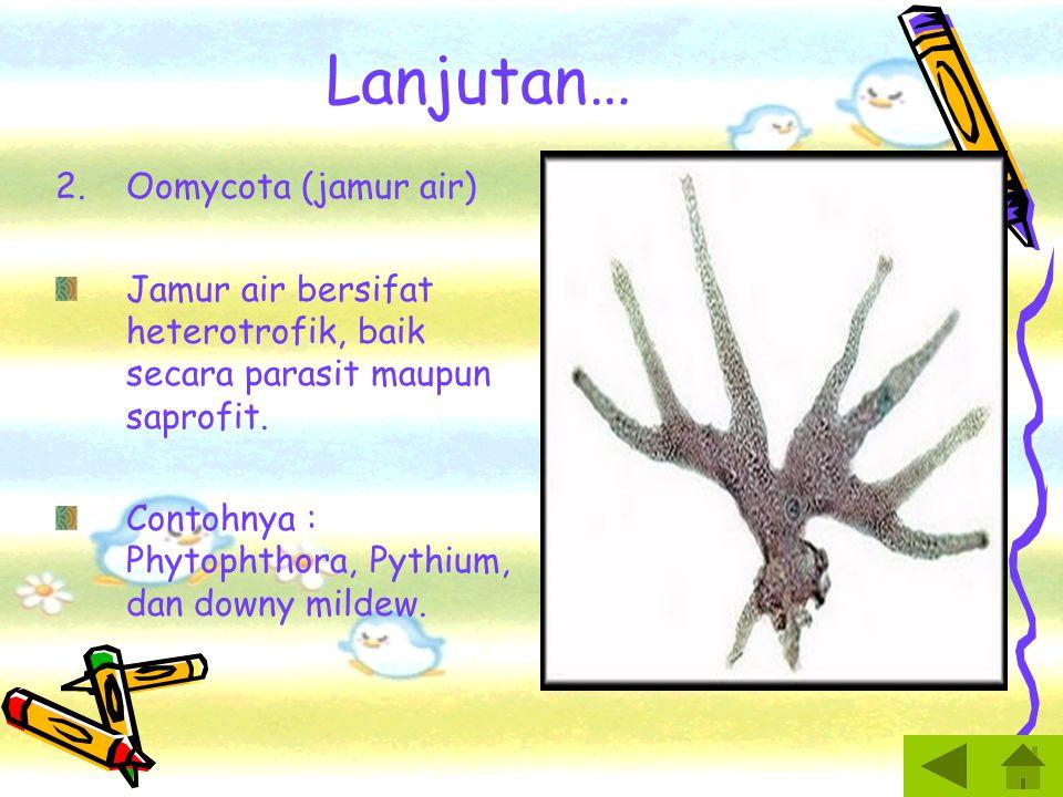 Lanjutan… Oomycota (jamur air)