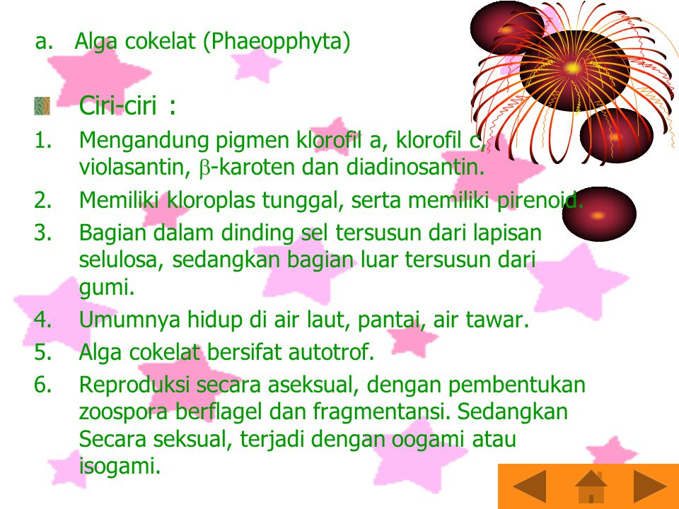 a. Alga cokelat (Phaeopphyta)