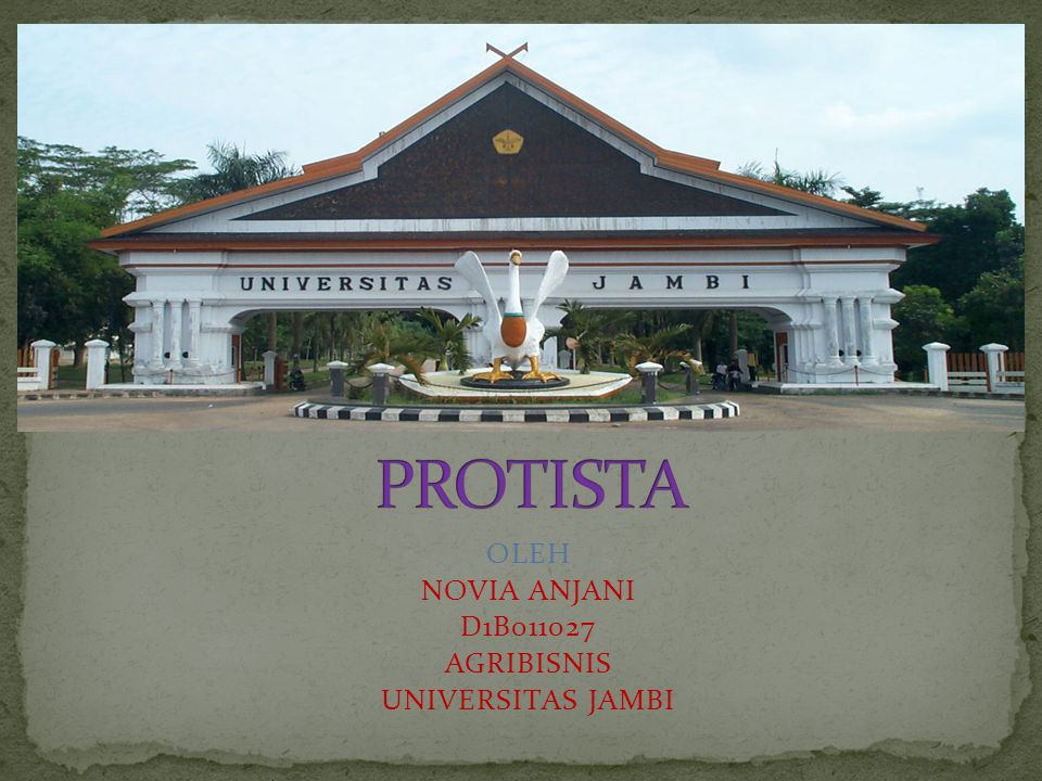 OLEH NOVIA ANJANI D1B011027 AGRIBISNIS UNIVERSITAS JAMBI