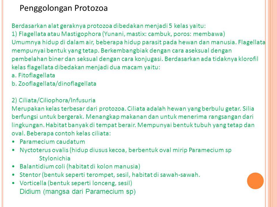 Penggolongan Protozoa Berdasarkan alat geraknya protozoa dibedakan menjadi 5 kelas yaitu: 1) Flagellata atau Mastigophora (Yunani, mastix: cambuk, poros: membawa) Umumnya hidup di dalam air, beberapa hidup parasit pada hewan dan manusia. Flagellata mempunyai bentuk yang tetap. Berkembangbiak dengan cara aseksual dengan pembelahan biner dan seksual dengan cara konjugasi. Berdasarkan ada tidaknya klorofil kelas flagellata dibedakan menjadi dua macam yaitu: a. Fitoflagellata b. Zooflagellata/dinoflagellata 2) Ciliata/Ciliophora/Infusuria Merupakan kelas terbesar dari protozoa. Ciliata adalah hewan yang berbulu getar. Silia berfungsi untuk bergerak. Menangkap makanan dan untuk menerima rangsangan dari lingkungan. Habitat banyak di tempat berair. Mempunyai bentuk tubuh yang tetap dan oval. Beberapa contoh kelas ciliata: