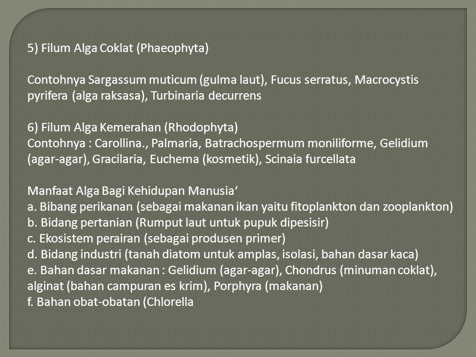 5) Filum Alga Coklat (Phaeophyta) Contohnya Sargassum muticum (gulma laut), Fucus serratus, Macrocystis pyrifera (alga raksasa), Turbinaria decurrens