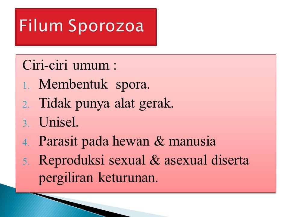 Filum Sporozoa Ciri-ciri umum : Membentuk spora.