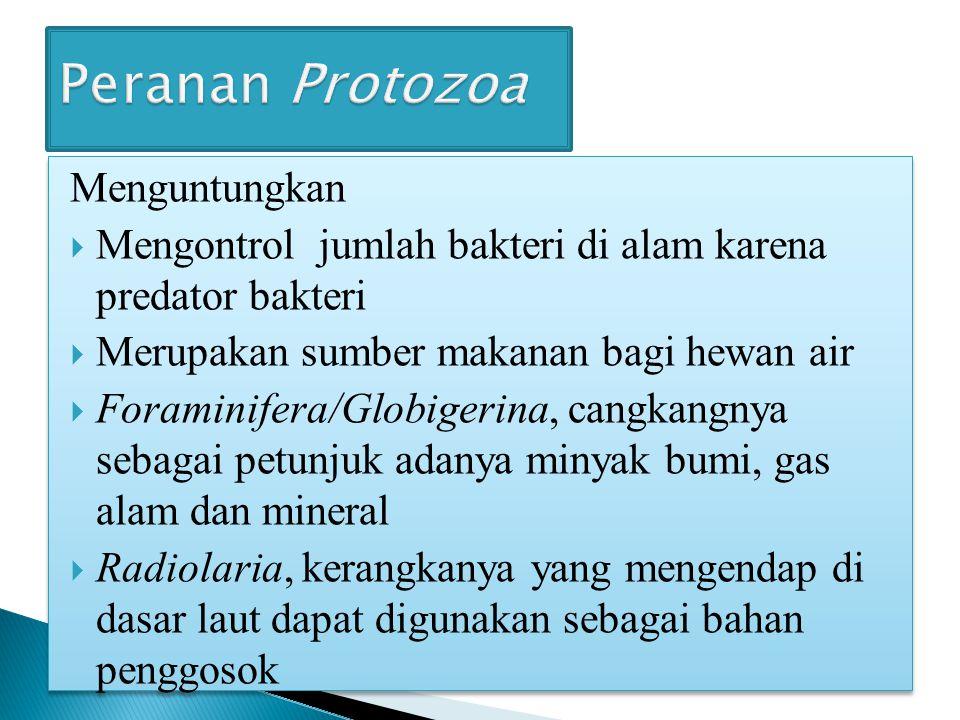 Peranan Protozoa Menguntungkan