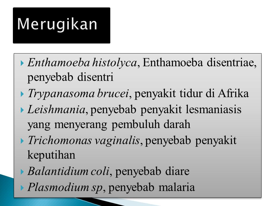 Merugikan Enthamoeba histolyca, Enthamoeba disentriae, penyebab disentri. Trypanasoma brucei, penyakit tidur di Afrika.