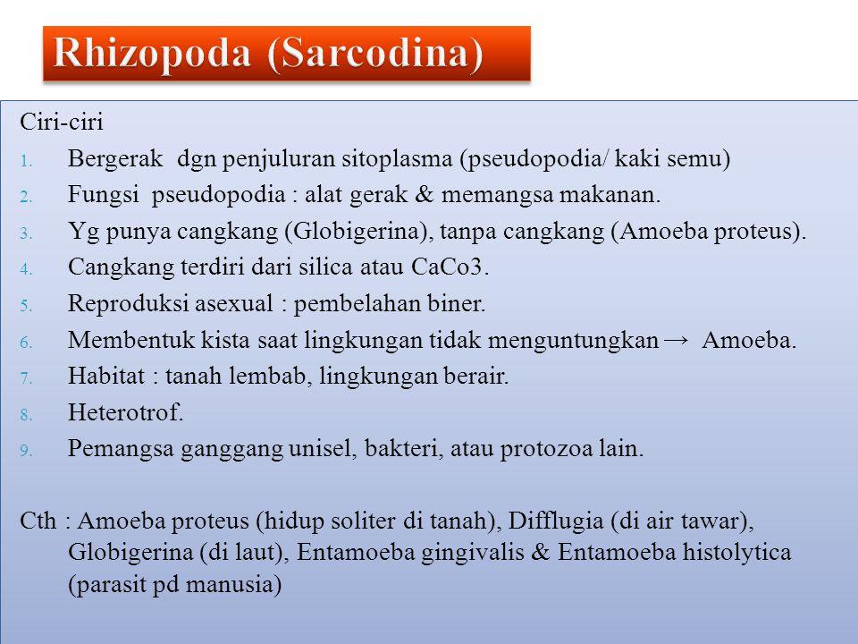 Rhizopoda (Sarcodina)