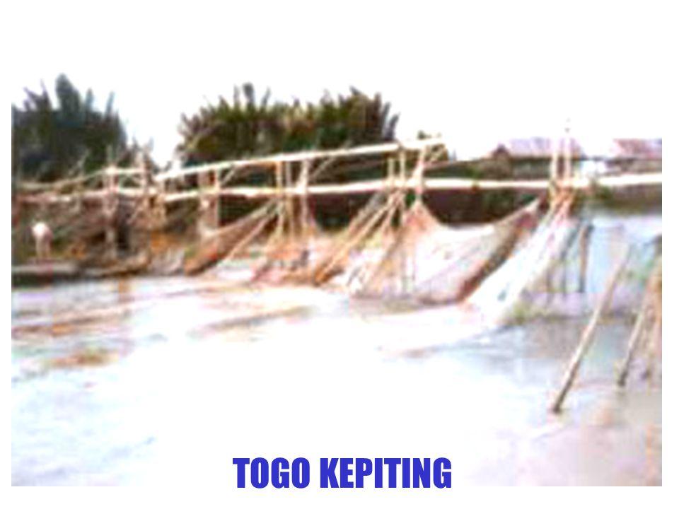 TOGO KEPITING