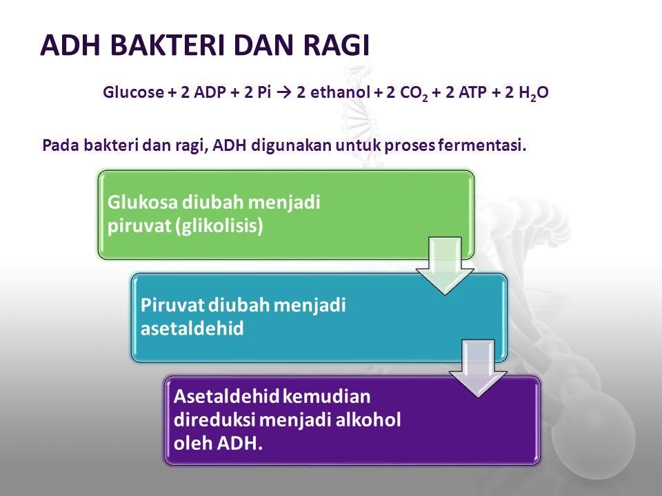 Glucose + 2 ADP + 2 Pi → 2 ethanol + 2 CO2 + 2 ATP + 2 H2O