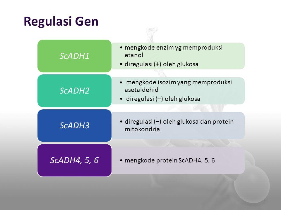 Regulasi Gen ScADH1 ScADH2 ScADH3 ScADH4, 5, 6