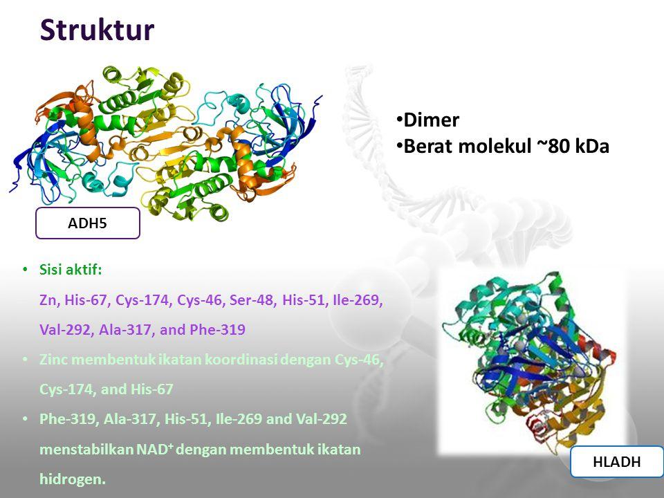 Struktur Dimer Berat molekul ~80 kDa ADH5 Sisi aktif: