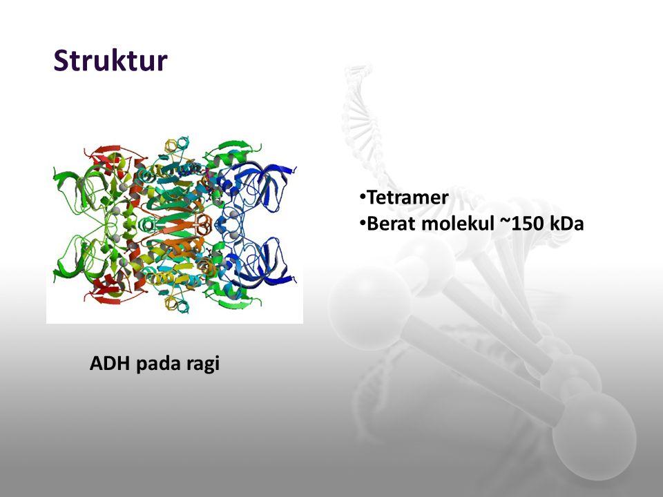 Struktur Tetramer Berat molekul ~150 kDa ADH pada ragi