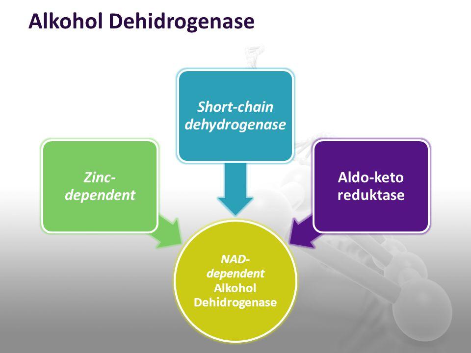 Alkohol Dehidrogenase