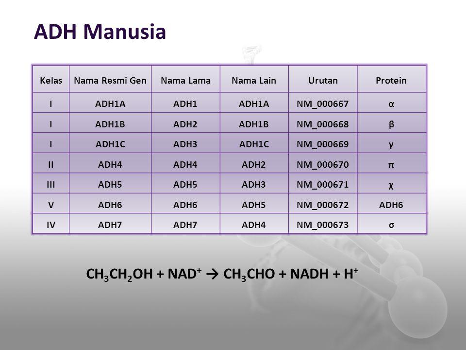 CH3CH2OH + NAD+ → CH3CHO + NADH + H+