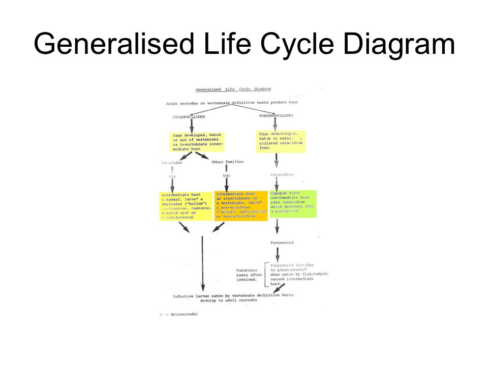 Generalised Life Cycle Diagram