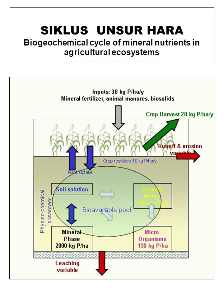 Biogeochemical cycle of mineral nutrients in agricultural ecosystems