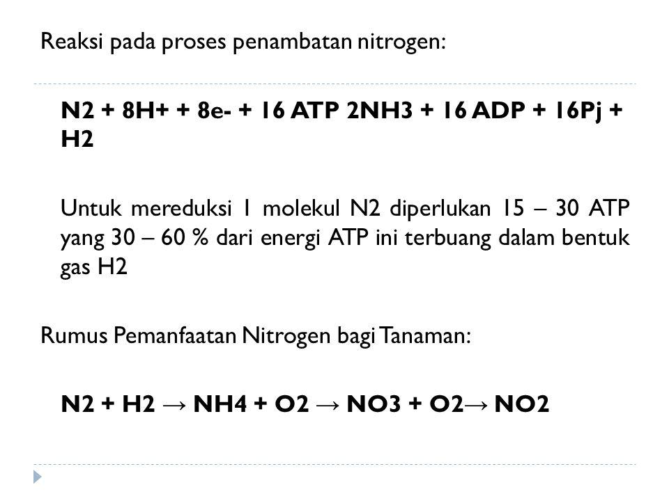 Reaksi pada proses penambatan nitrogen: N2 + 8H+ + 8e- + 16 ATP 2NH3 + 16 ADP + 16Pj + H2 Untuk mereduksi 1 molekul N2 diperlukan 15 – 30 ATP yang 30 – 60 % dari energi ATP ini terbuang dalam bentuk gas H2 Rumus Pemanfaatan Nitrogen bagi Tanaman: N2 + H2 → NH4 + O2 → NO3 + O2→ NO2