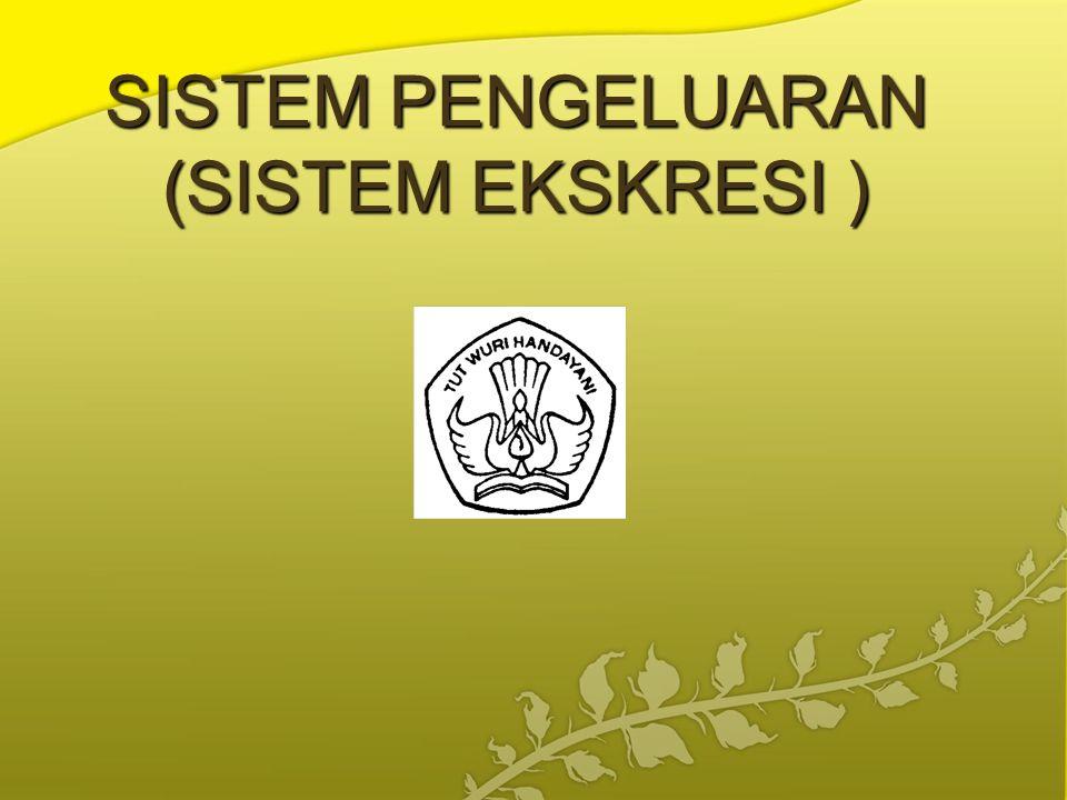 SISTEM PENGELUARAN (SISTEM EKSKRESI )