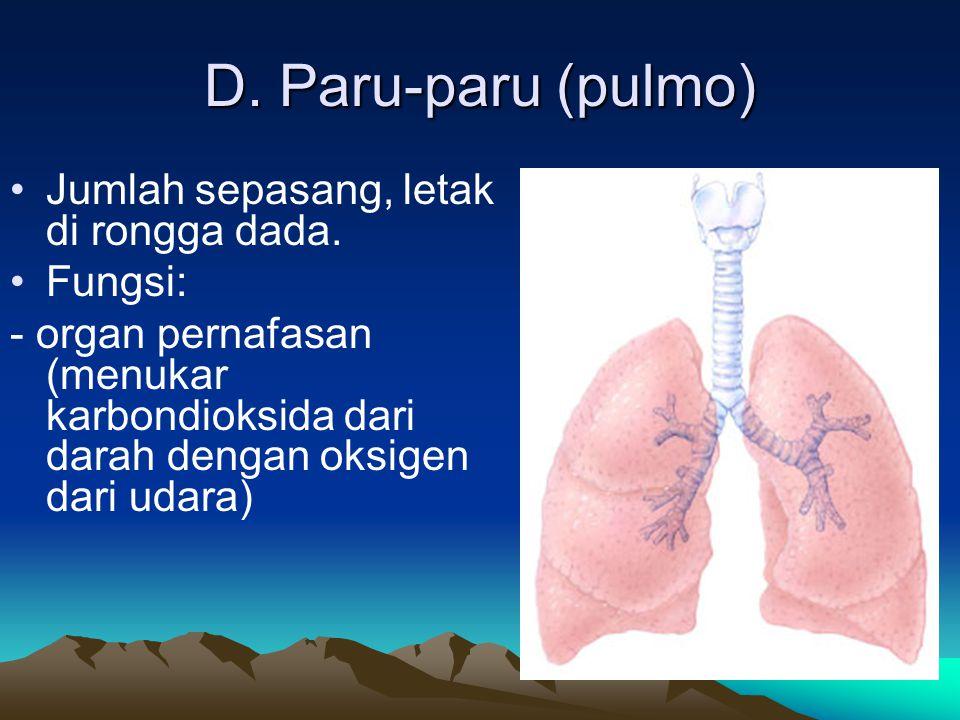 D. Paru-paru (pulmo) Jumlah sepasang, letak di rongga dada. Fungsi: