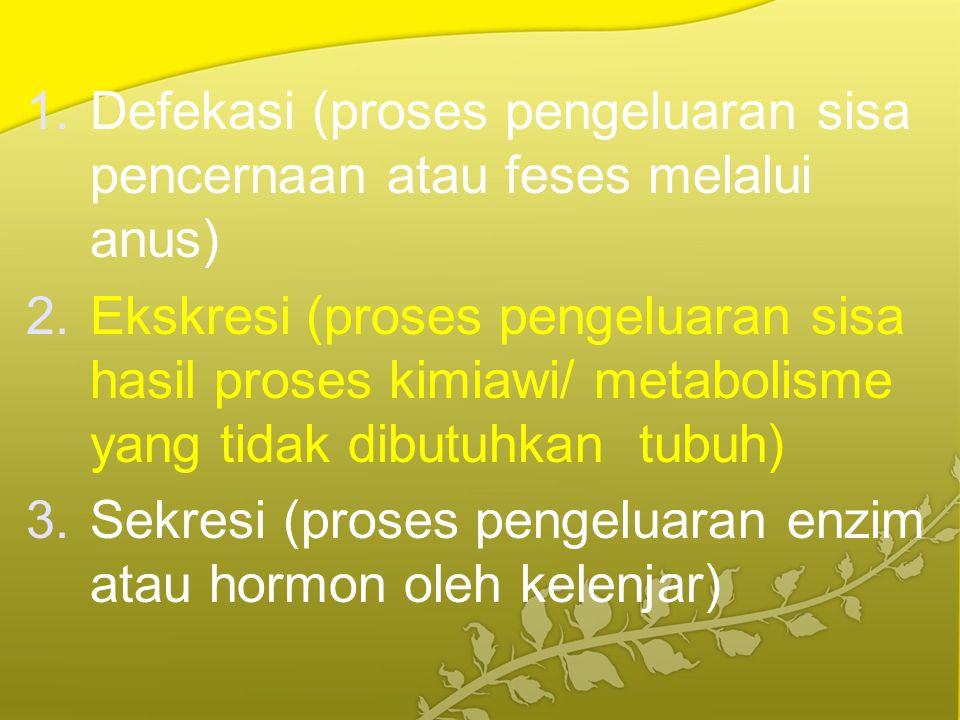 Defekasi (proses pengeluaran sisa pencernaan atau feses melalui anus)