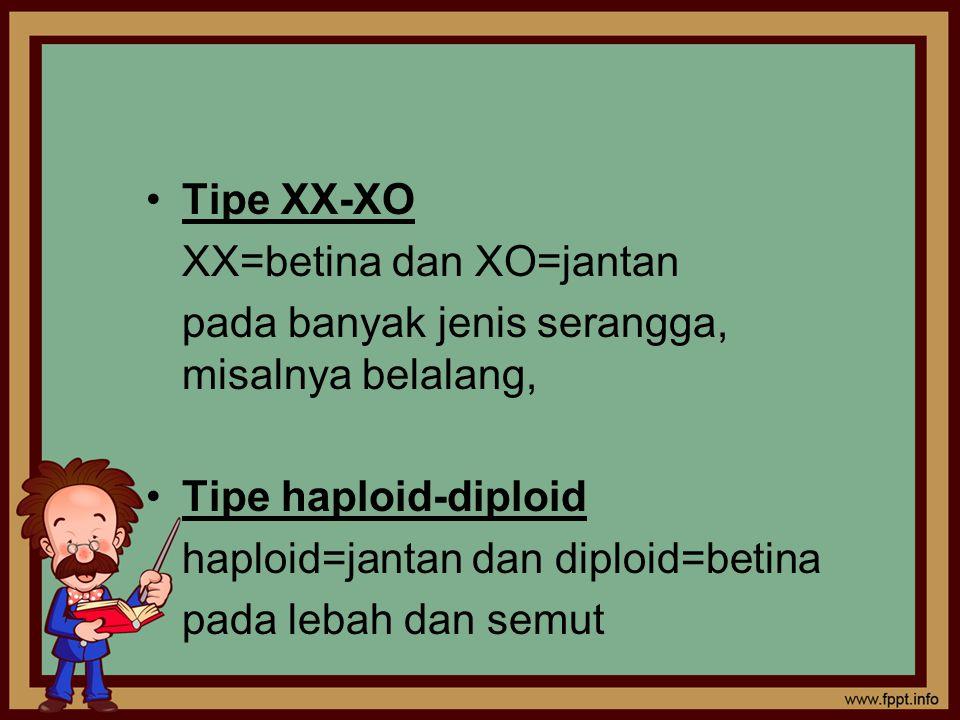 Tipe XX-XO XX=betina dan XO=jantan. pada banyak jenis serangga, misalnya belalang, Tipe haploid-diploid.