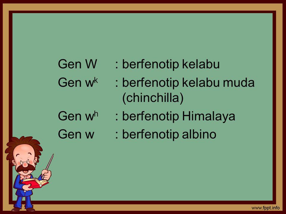 Gen W : berfenotip kelabu