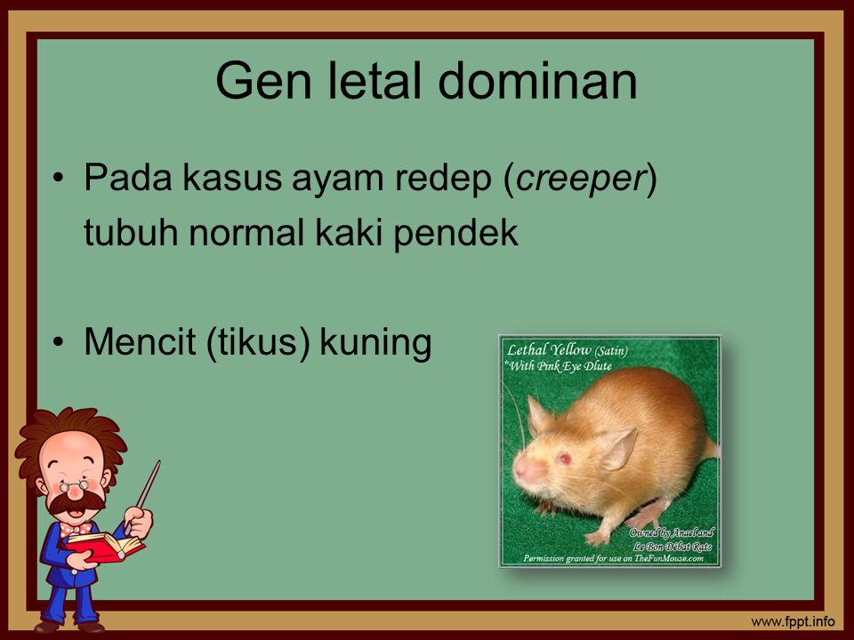 Gen letal dominan Pada kasus ayam redep (creeper)