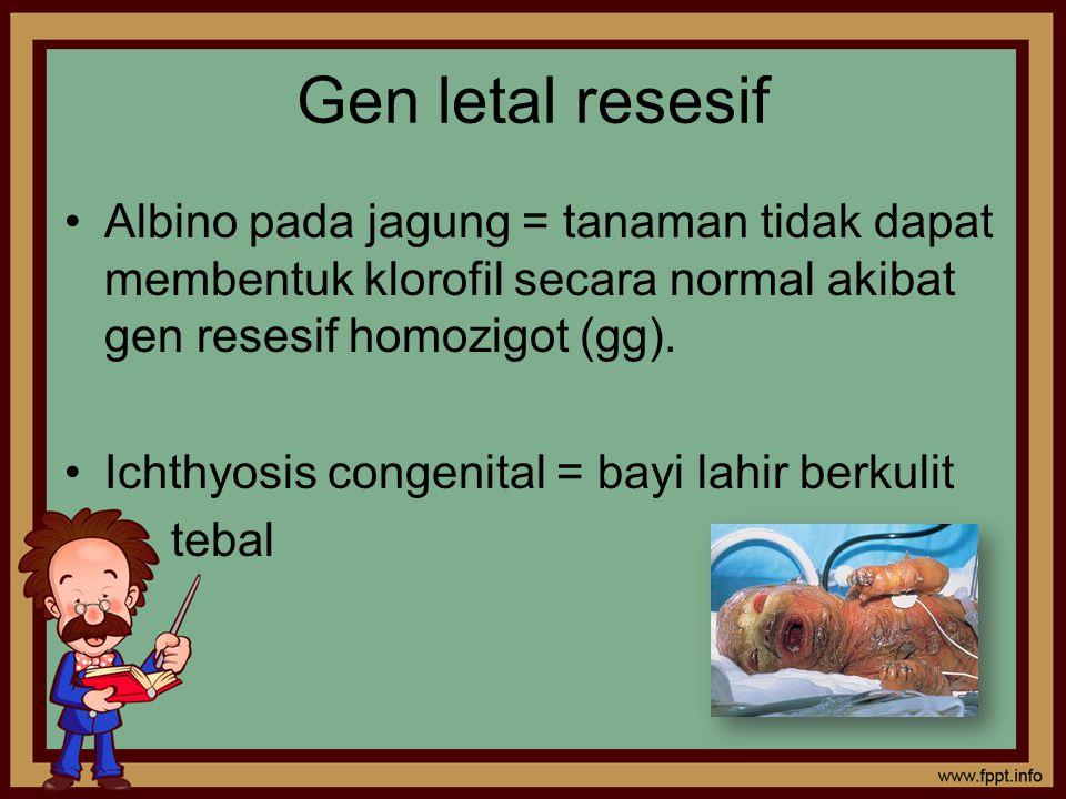 Gen letal resesif Albino pada jagung = tanaman tidak dapat membentuk klorofil secara normal akibat gen resesif homozigot (gg).