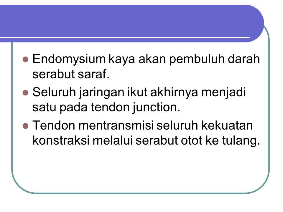 Endomysium kaya akan pembuluh darah serabut saraf.