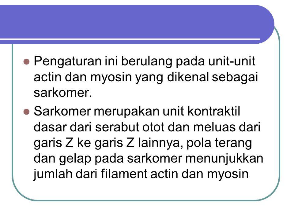 Pengaturan ini berulang pada unit-unit actin dan myosin yang dikenal sebagai sarkomer.