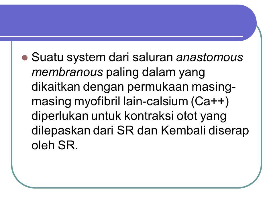 Suatu system dari saluran anastomous membranous paling dalam yang dikaitkan dengan permukaan masing-masing myofibril lain-calsium (Ca++) diperlukan untuk kontraksi otot yang dilepaskan dari SR dan Kembali diserap oleh SR.