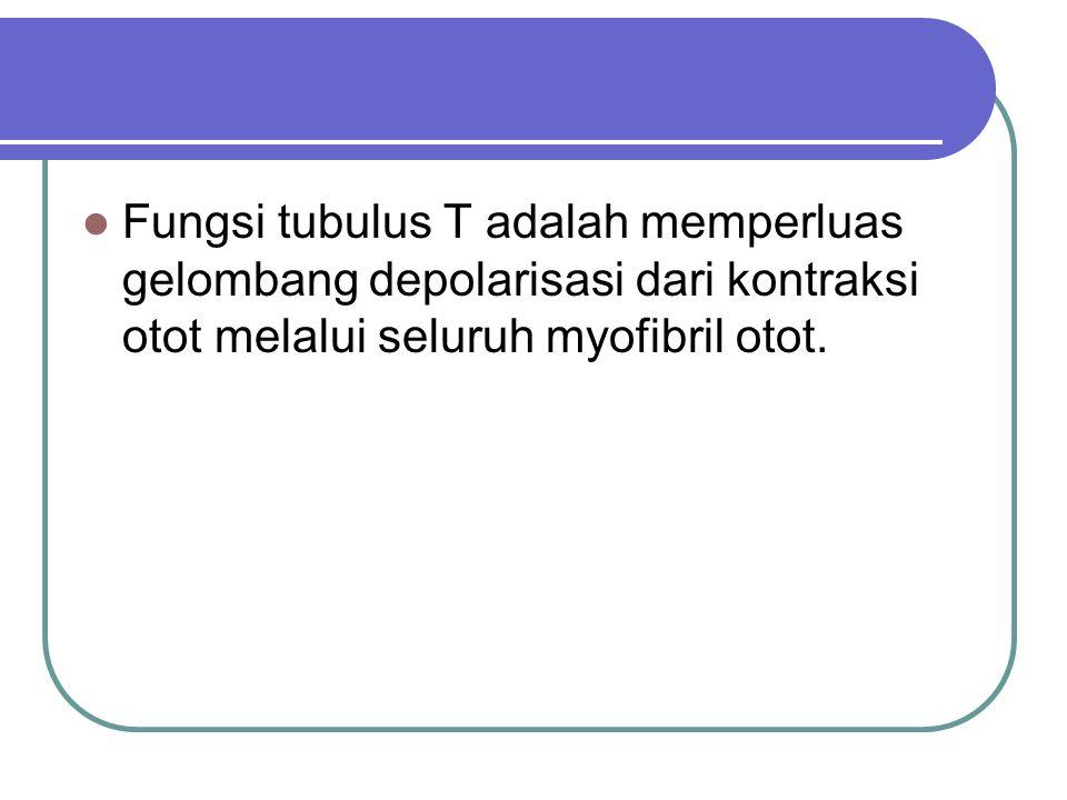 Fungsi tubulus T adalah memperluas gelombang depolarisasi dari kontraksi otot melalui seluruh myofibril otot.