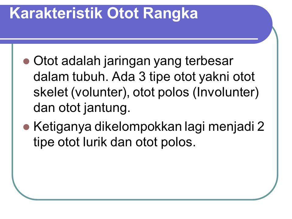 Karakteristik Otot Rangka