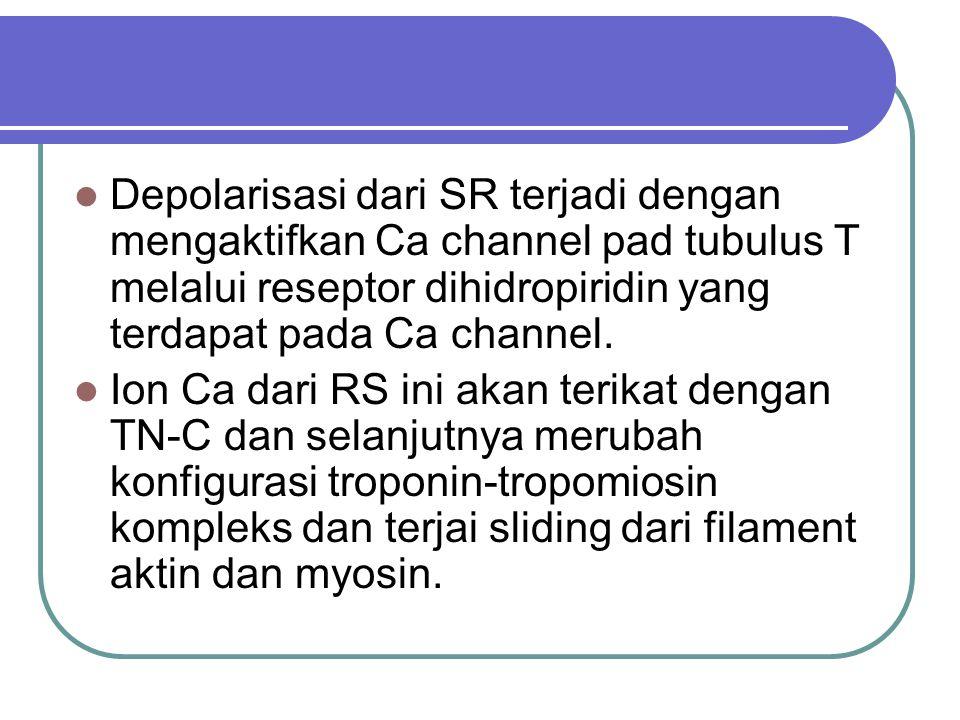 Depolarisasi dari SR terjadi dengan mengaktifkan Ca channel pad tubulus T melalui reseptor dihidropiridin yang terdapat pada Ca channel.