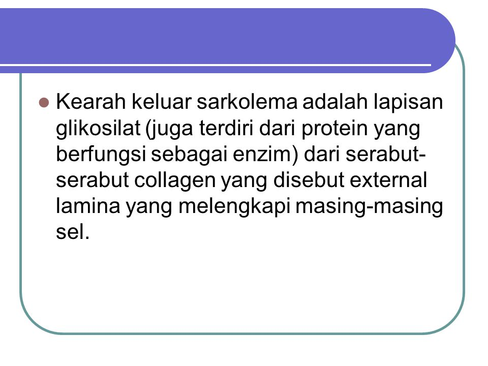 Kearah keluar sarkolema adalah lapisan glikosilat (juga terdiri dari protein yang berfungsi sebagai enzim) dari serabut-serabut collagen yang disebut external lamina yang melengkapi masing-masing sel.