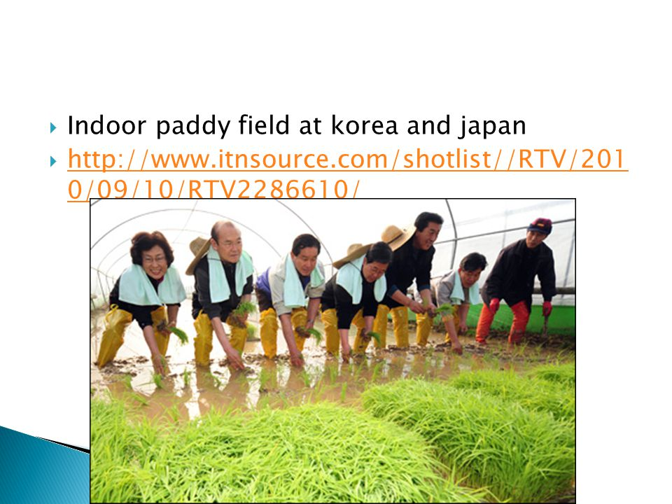 Indoor paddy field at korea and japan