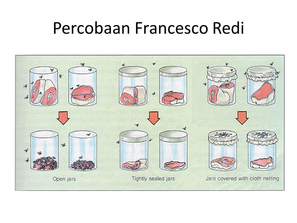 Percobaan Francesco Redi