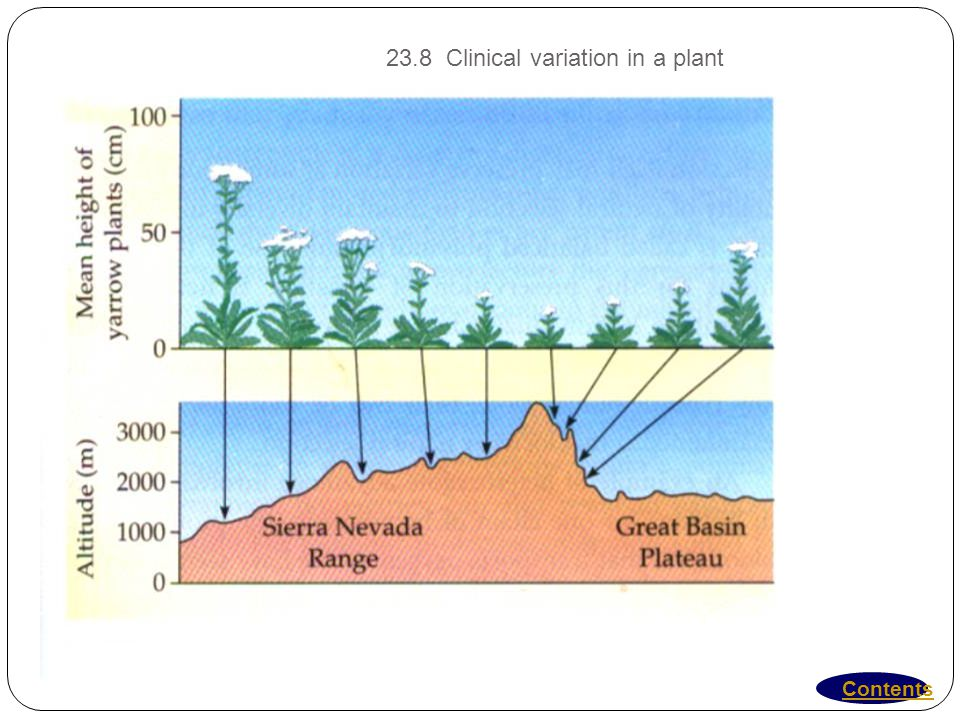 23.8 Clinical variation in a plant