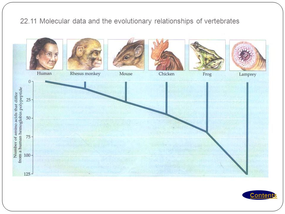 22.11 Molecular data and the evolutionary relationships of vertebrates
