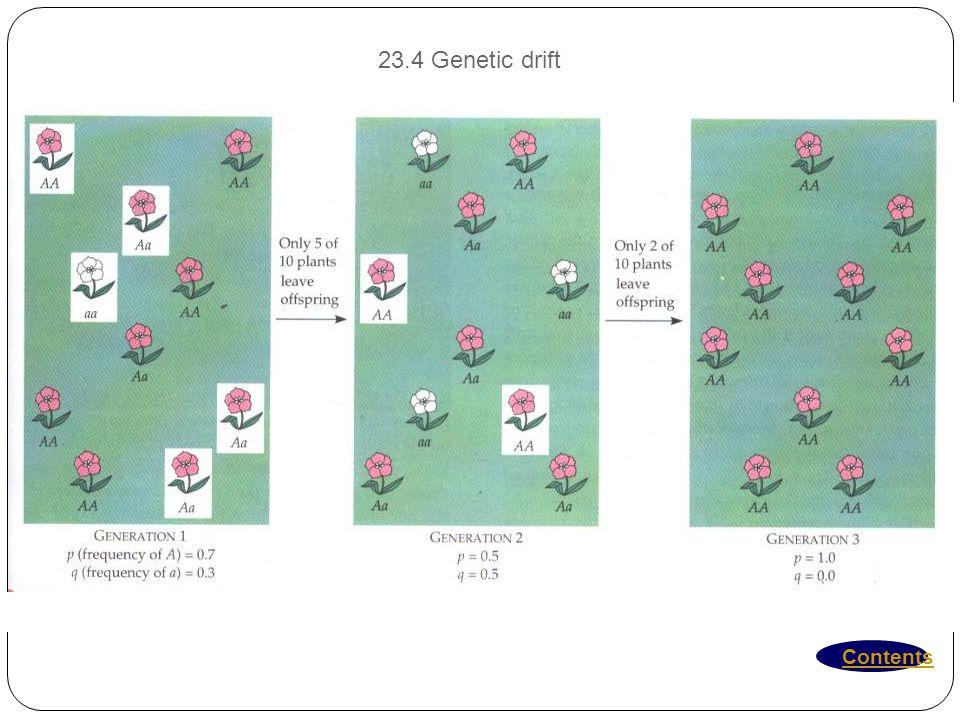 23.4 Genetic drift Contents
