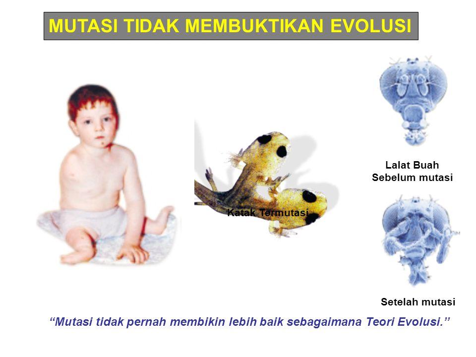MUTASI TIDAK MEMBUKTIKAN EVOLUSI