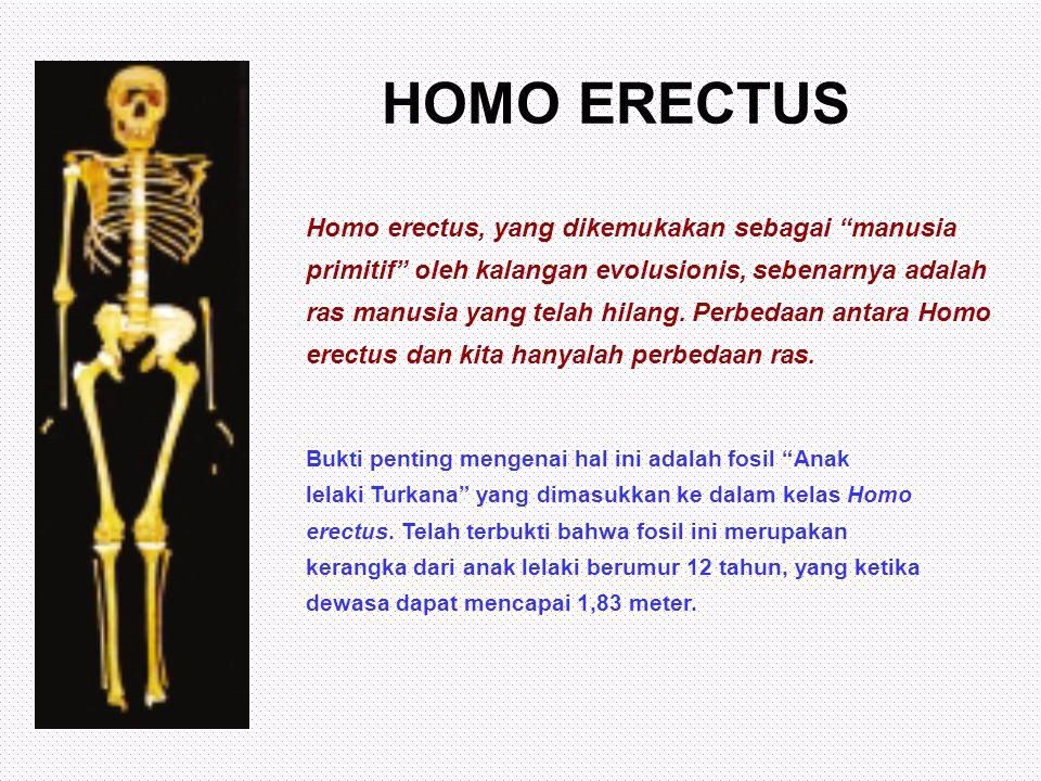 HOMO ERECTUS Homo erectus, yang dikemukakan sebagai manusia