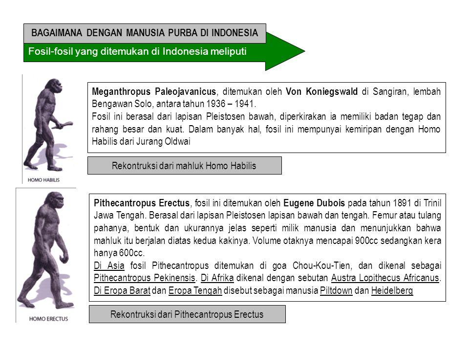 BAGAIMANA DENGAN MANUSIA PURBA DI INDONESIA
